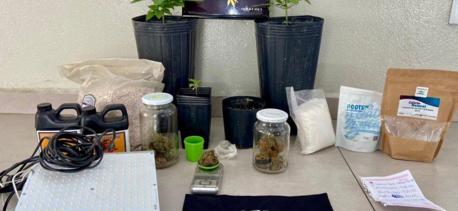 Casal que cultivava maconha em vasos é preso em Bragança