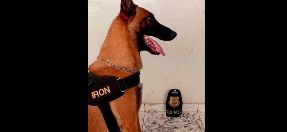 Guarda Municipal de Bragança apreende drogas