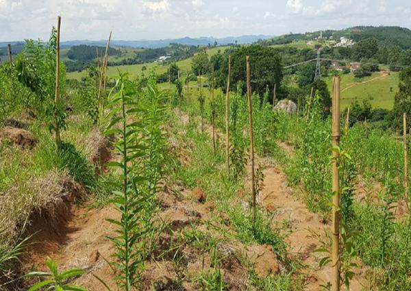 Projetos de recuperação de áreas degradadas continuam em andamento