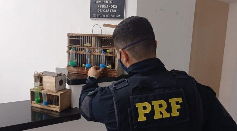 Polícia apreende pássaros sendo transportador em ônibus